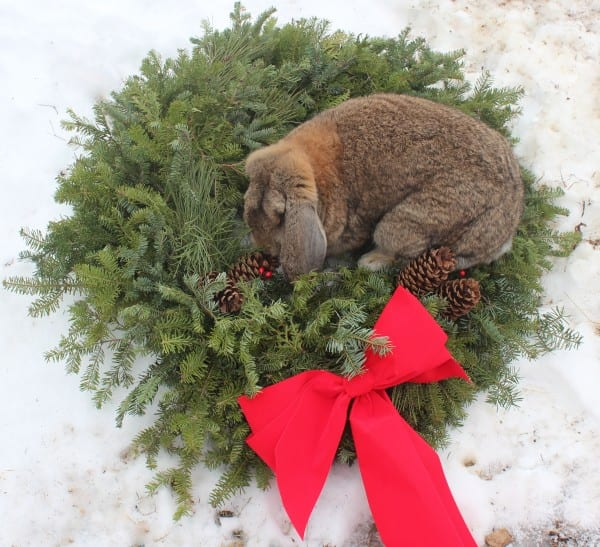 Holiday wishes from Perseus the Rabbit!