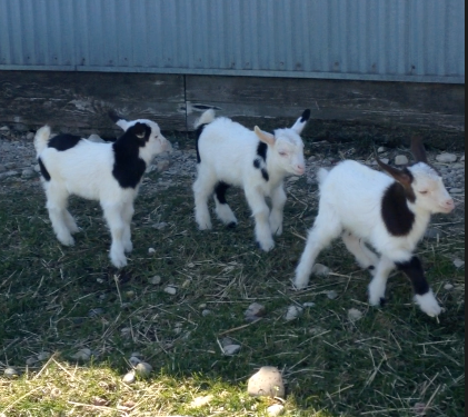 Skipper and the Twins explore the outdoors!